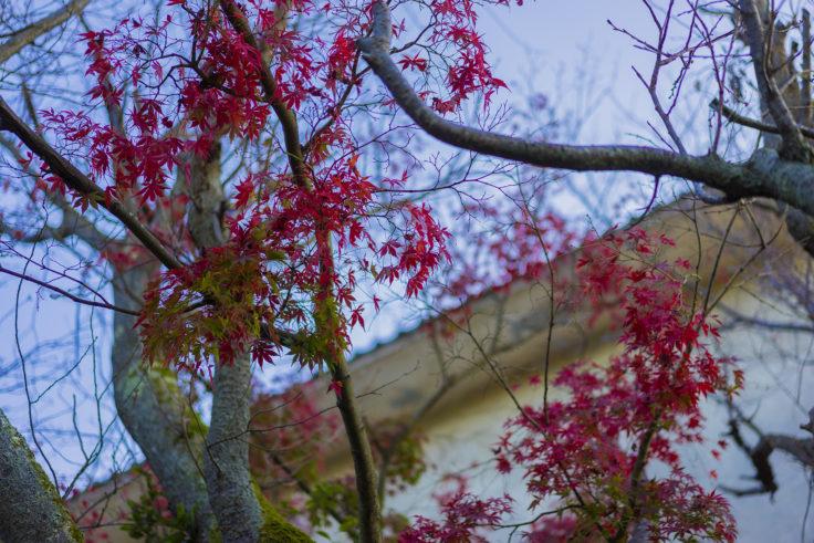 屋島の紅葉3