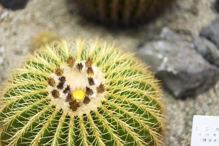 東山植物園サボテン