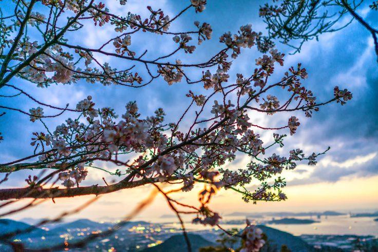 白峰展望台の夕焼け桜2
