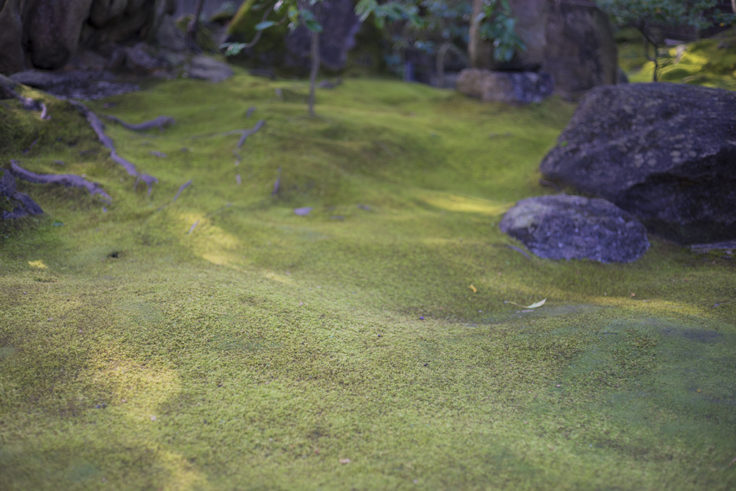 旧野崎家の庭園