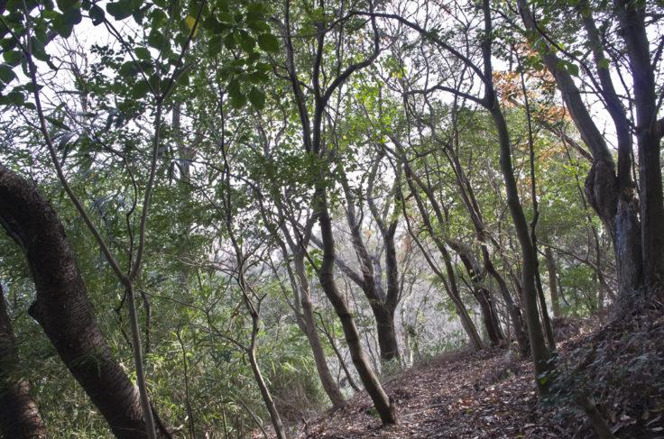 妙見神社の山道