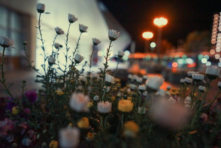 夜のノースポール