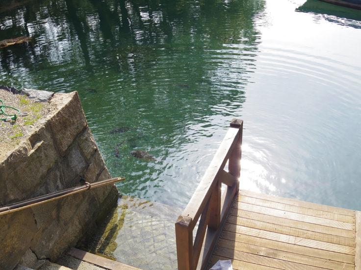 玉藻公園の鯛