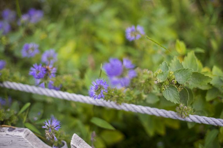 よもみの庭の花