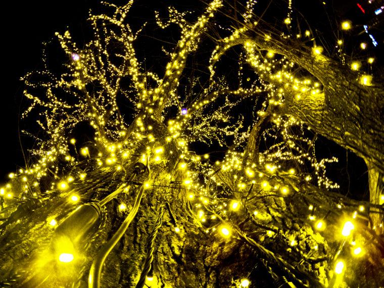 帯広のツリー