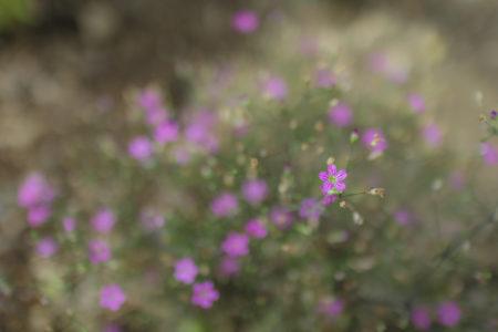 松本市の花1