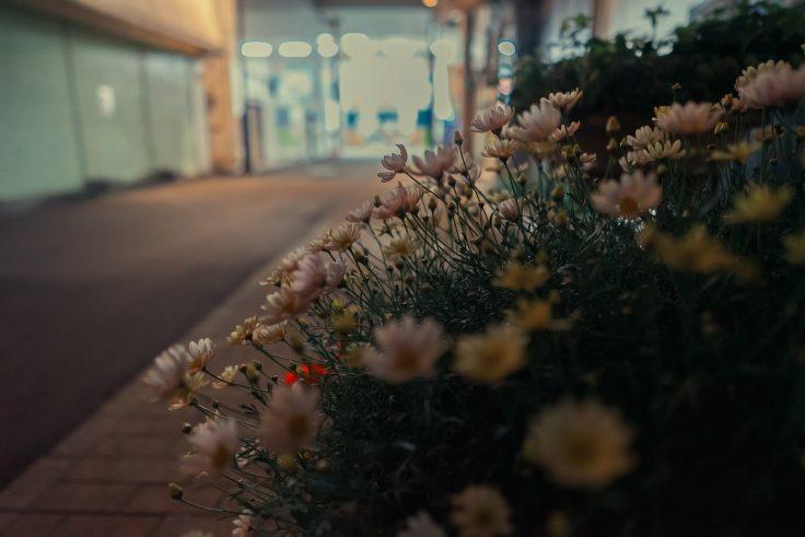 常磐街の路地に咲く花