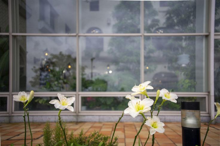 淡路島ハイウェイオアシスの花