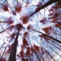 三木町太古の森