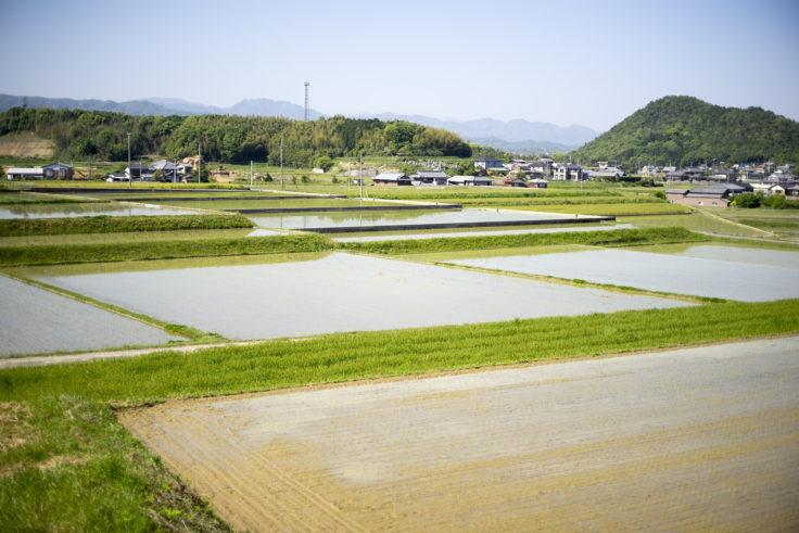 大井七つ塚古墳群の田園風景