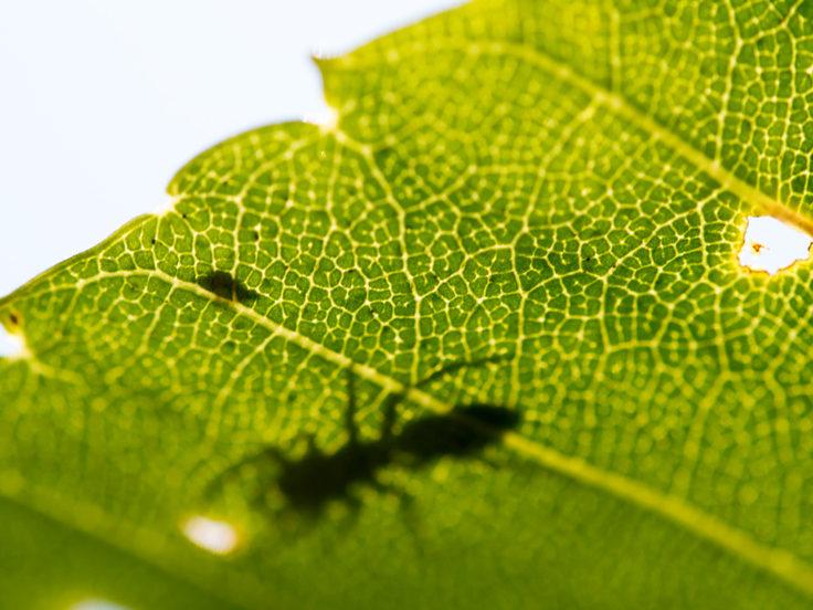 葉っぱと蟻