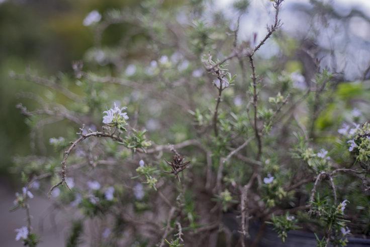 四方見展望台の花2