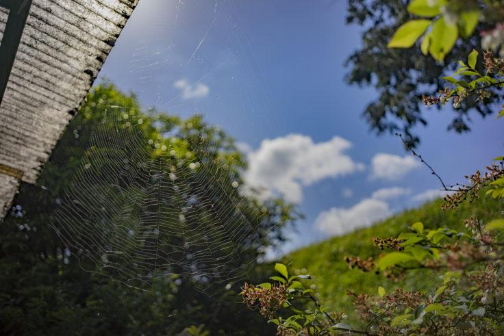 牛おじさん蜘蛛の巣