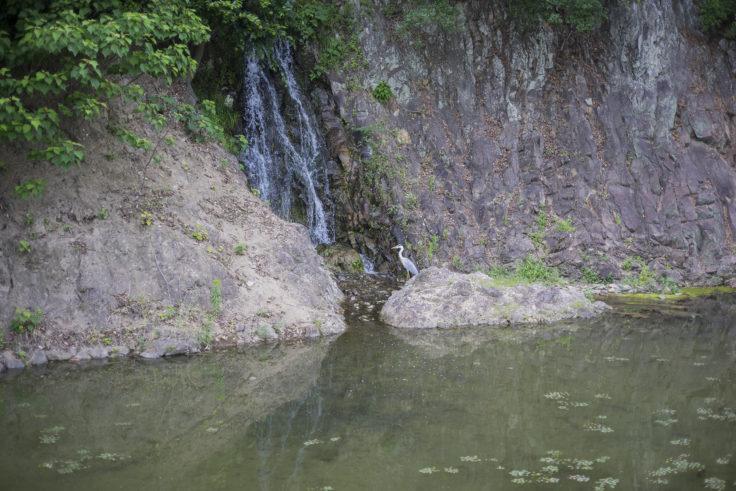 栗林公園の桶樋滝とサギ