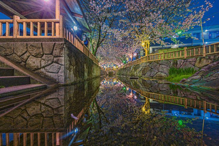 超広角レンズで鹿の井出水の夜桜を撮影