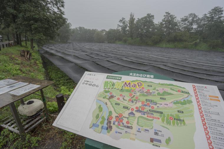 大王わさび農場マップ