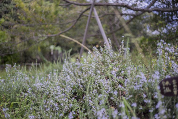 四方見展望台の花