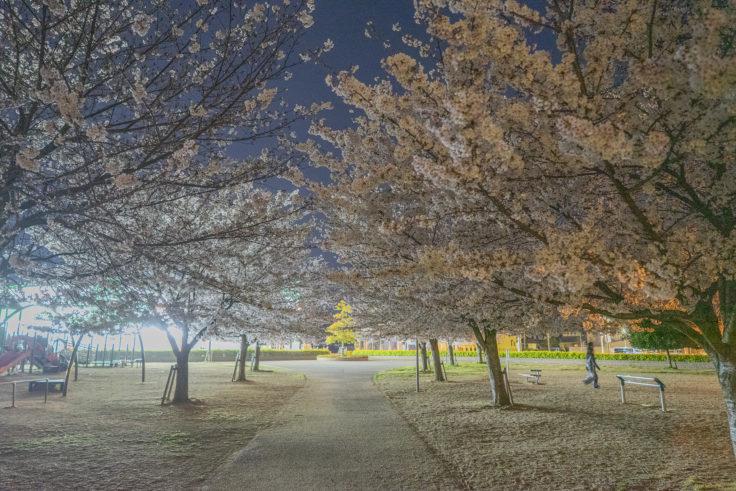木太中央公園の夜桜ライトアップ3