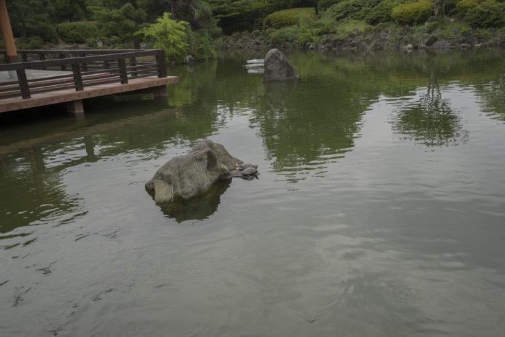 あがたの森の池と亀
