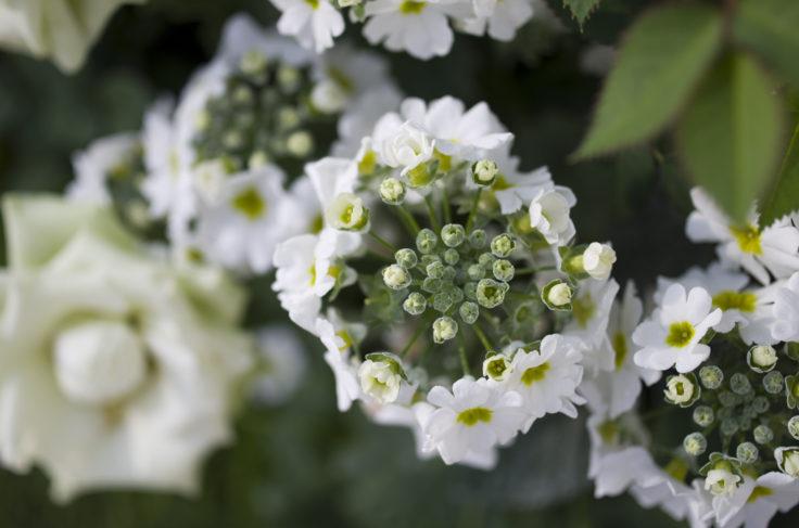 軌跡の星の植物館花