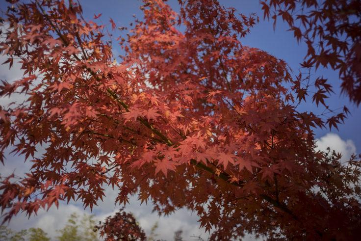アスタムランドの紅葉