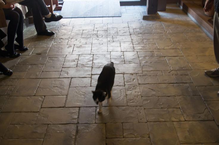 むかし下津井回船問屋の猫