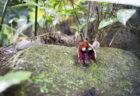 牧野植物園のダースベイダー