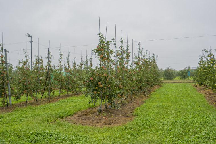 信州りんごの木