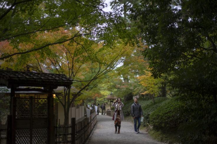 栗林公園の楓