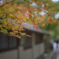 栗林公園の紅葉2