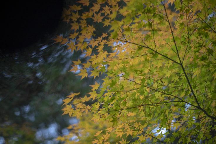 栗林公園の紅葉3