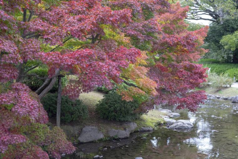 潺嵈池の紅葉