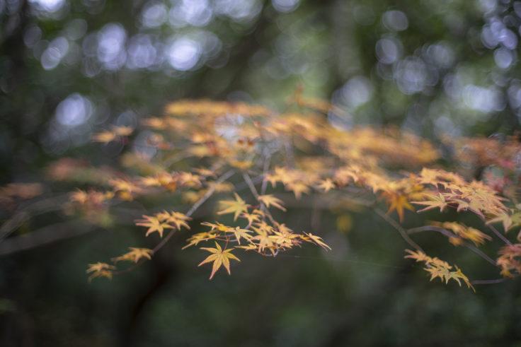 栗林公園の紅葉4
