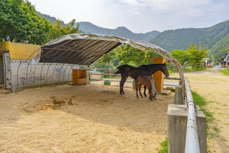 しおのえふじかわ牧場の馬