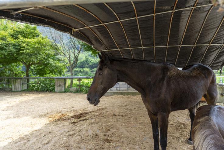 しおのえふじかわ牧場の馬2
