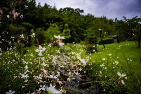 県立淡路島公園の花2