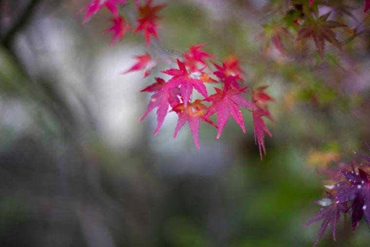 箸蔵山ロープウェイの紅葉