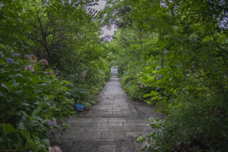 志度寺の緑