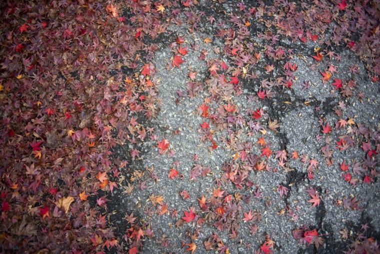 箸蔵山の紅葉落ち葉