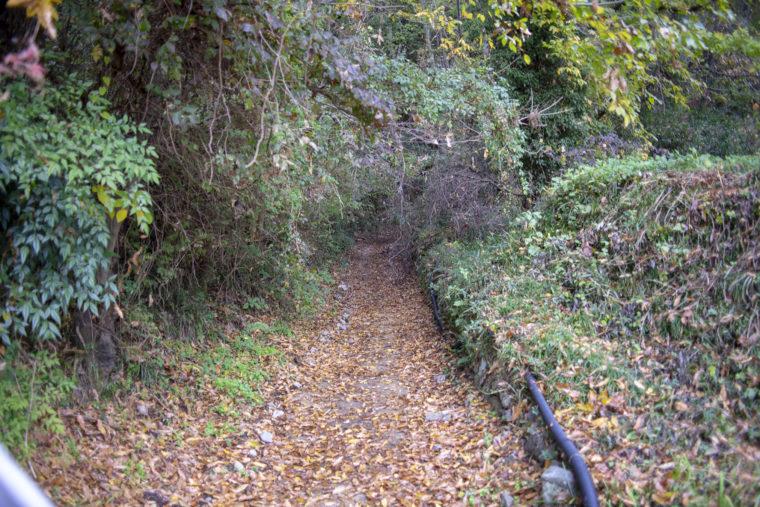 箸蔵山の登山道傾斜
