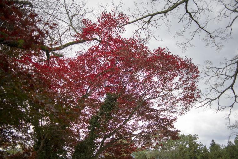 徳島県立池田高校三好校山地農場の紅葉