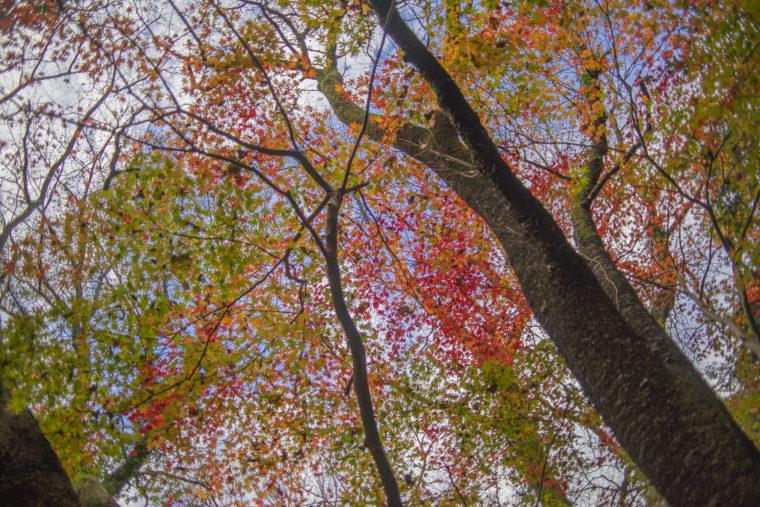 箸蔵寺の登山道紅葉