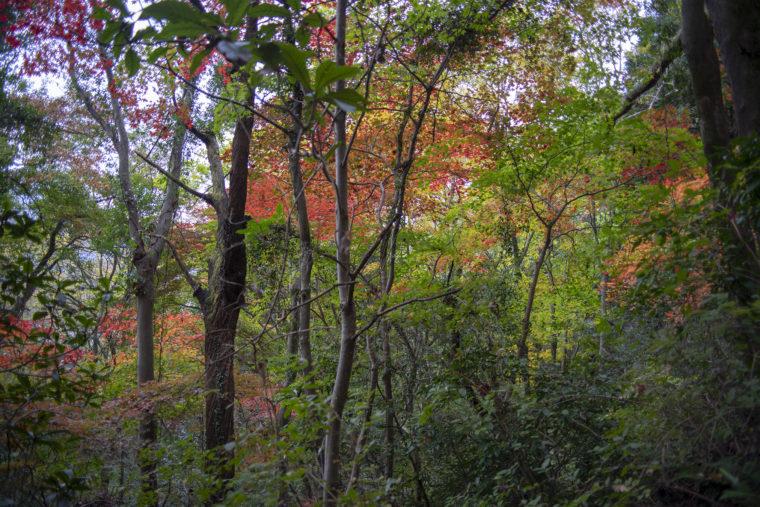 箸蔵寺の登山道紅葉2