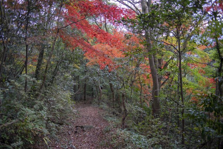 箸蔵寺の登山道紅葉3