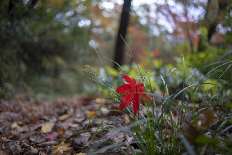 箸蔵寺の登山道紅葉4