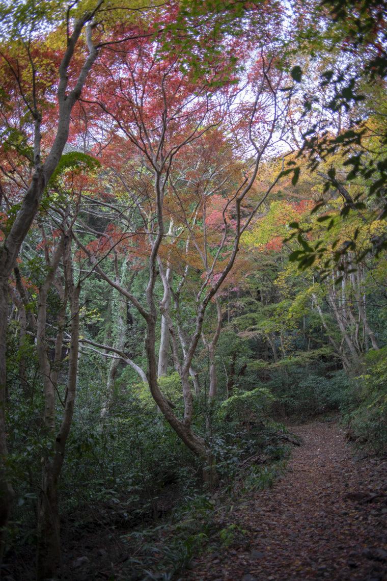 箸蔵寺の登山道紅葉5
