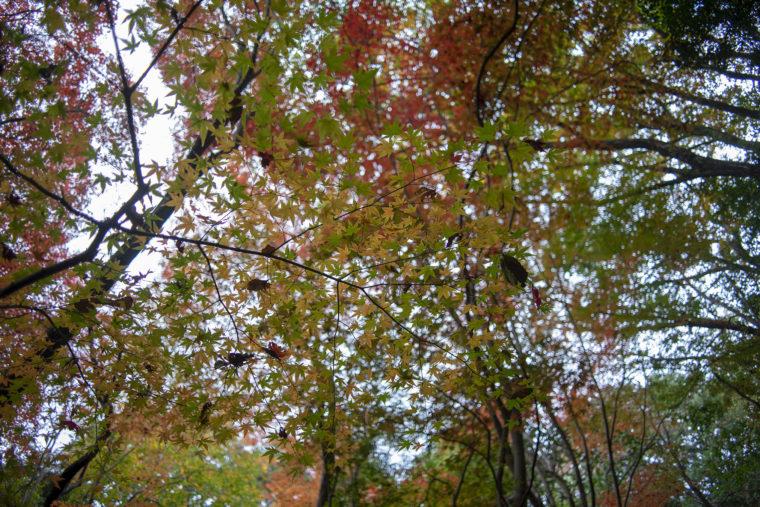 箸蔵寺の登山道紅葉7