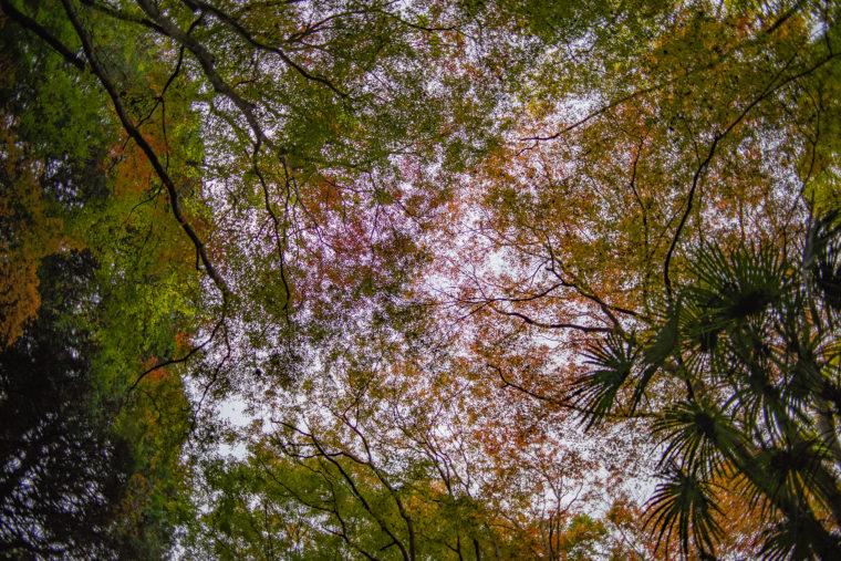 箸蔵寺の登山道紅葉8