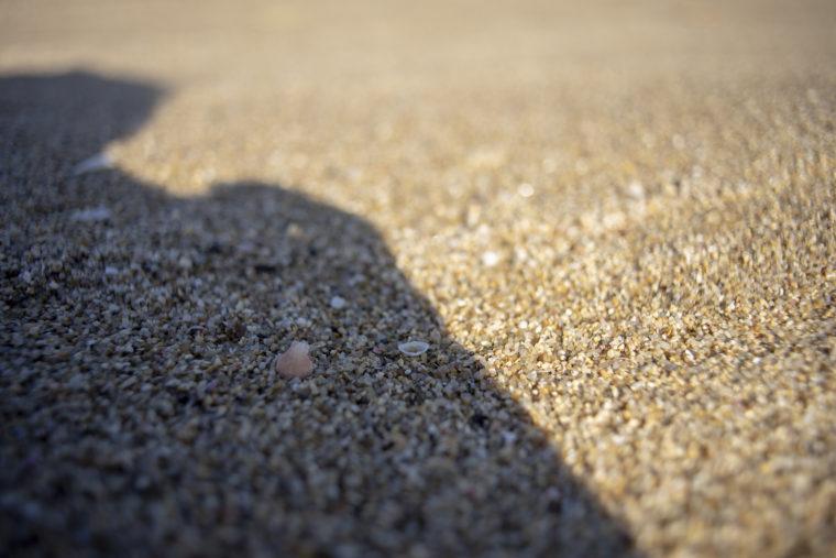 山田海岸貝殻