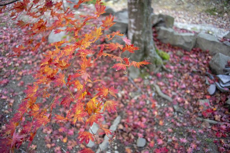 箸蔵山の紅葉10